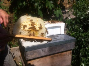 Honey from Castle Bees - photo by Ida Fabrizio